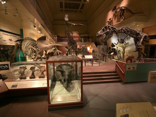 Dinosaur and Fossil Hall