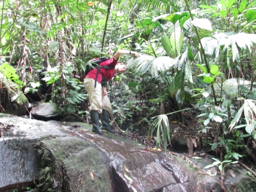 Research standing in stream checks under leaves