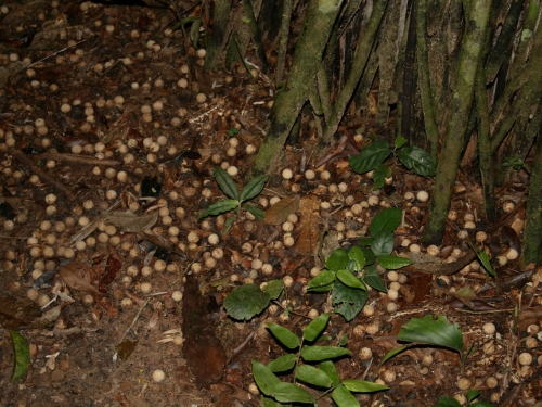 seeds on forest floor