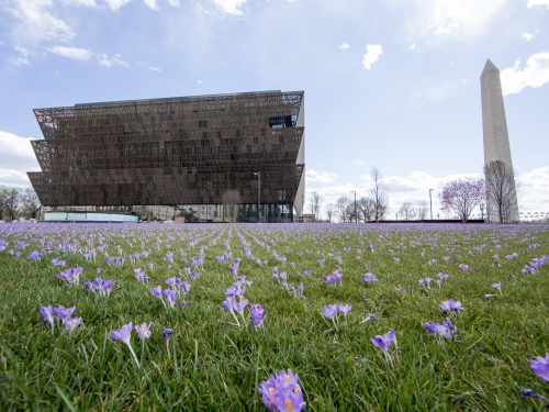 Museum exterior with crocuses, Washington monument