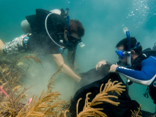 scooba divers