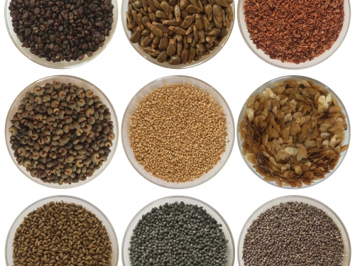 composite of different seeds