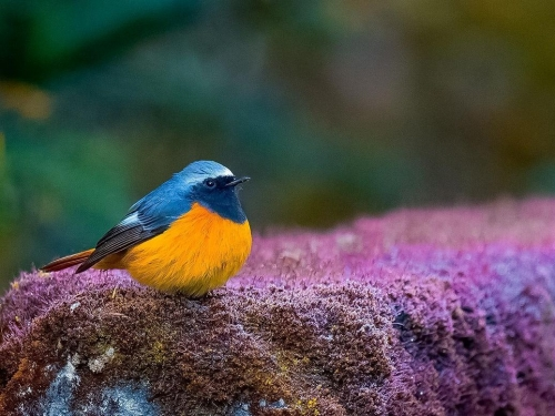 Bird sits on top of floral perch