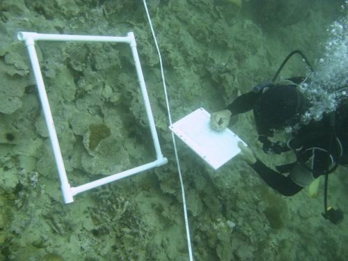 diver surveys reef