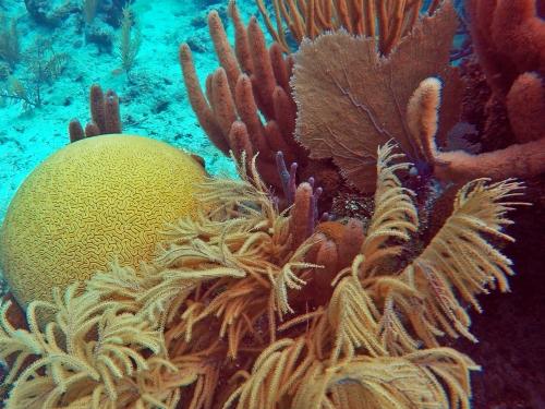 Healthy corals