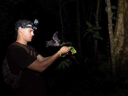 Young man wearing headlight releases a bat