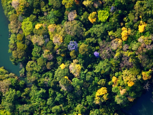 Aerial view of treetops