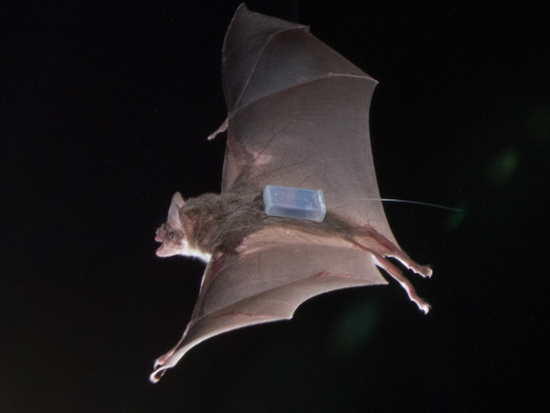Bat with transmitter