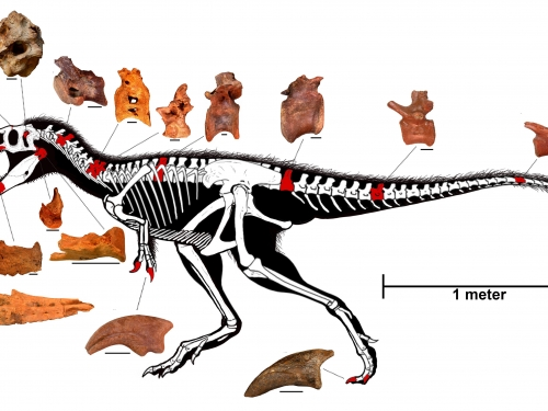 Diagram of skeleton
