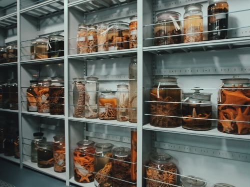 collection jars on shelf