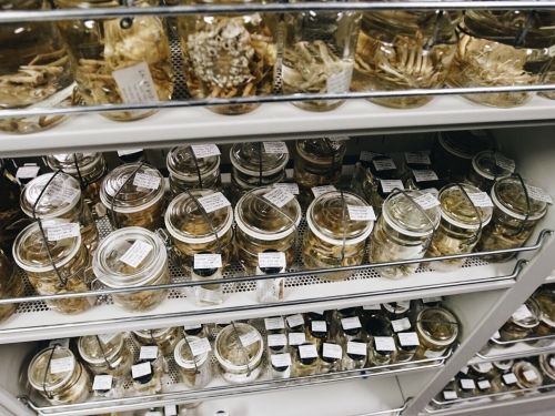 collection jars on shelves