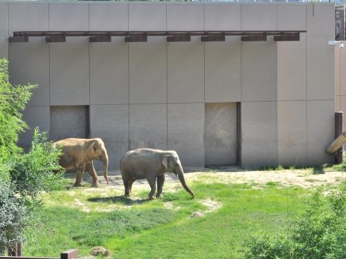 Elephants debut