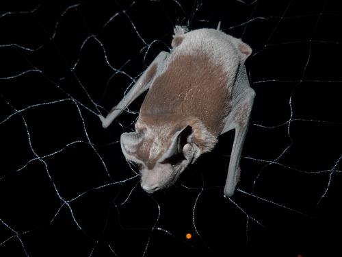 close-up of bat
