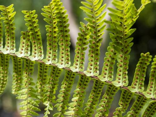 Underside of fern leaf