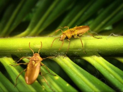 beetles on plant