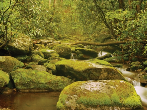 Panoramic view of stream, mossy rocks