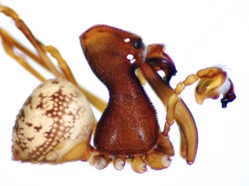 composite image of pelican spider
