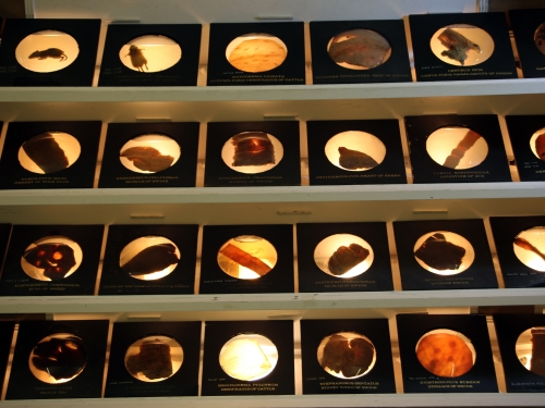 tray of parasite collections
