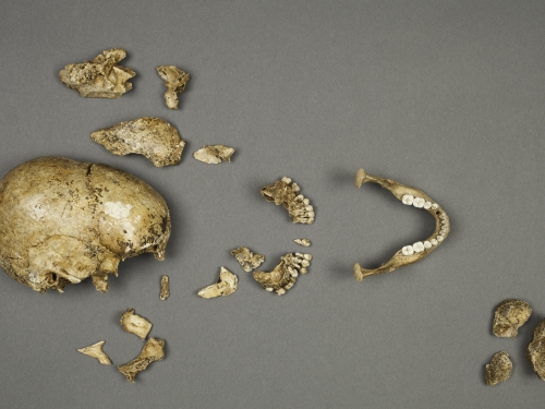 Human Remains, Jamestown