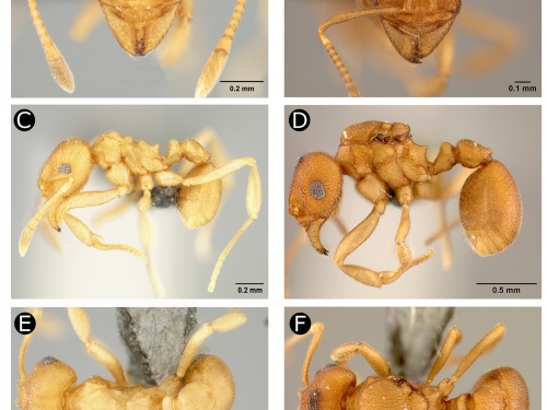 ant anatomy close-ups