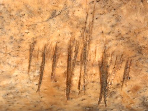 Jamestown - Mandible Detail 1