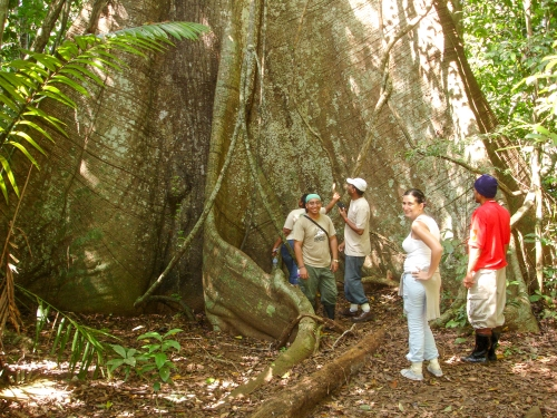 Group of people stand at base of giant tree