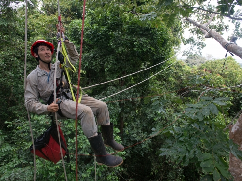 scientist suspended in harness among trees