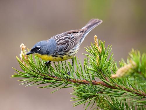 Closeup of bird on branch