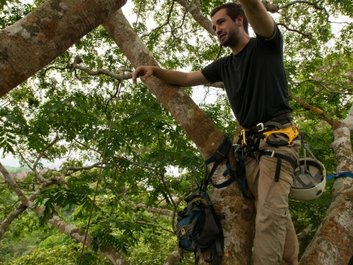 Researcher in tree