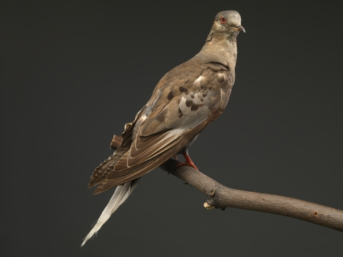 Taxidermy brown bird on branch