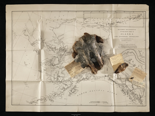 Fossils and old map of Alaska