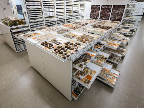 Cabinets and drawers full of cowrie shells