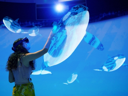 Person interacting with augmented reality of an orca