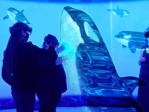 People interacted with augmented reality version of an orca