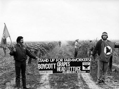 Boycott in field