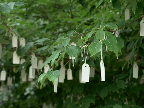 close up of notes tied to tree
