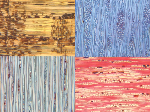 composite image of four brightly colored woods