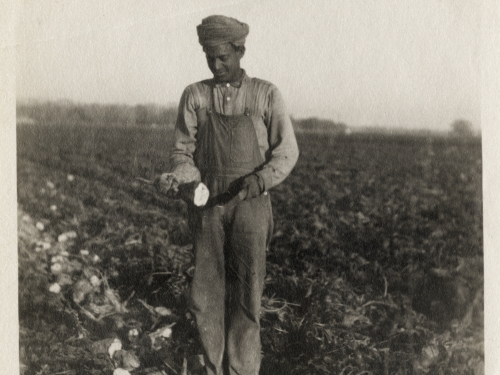 Beyond Bollywood - Worker Harvesting Beets