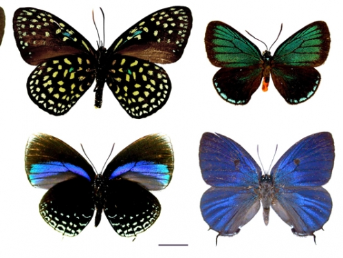 eight specimen butterflies