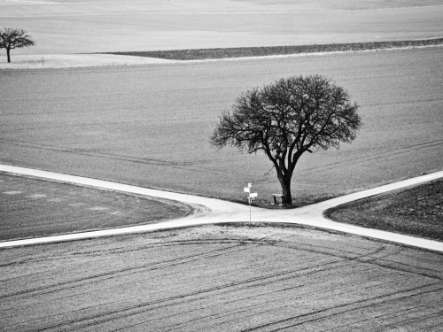 Black and white photo of tree at rural crossroads
