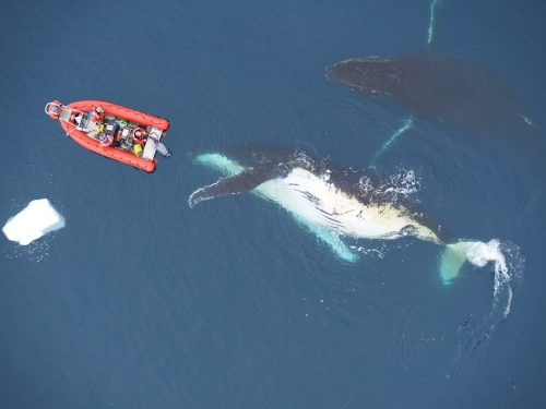 whales next to boat