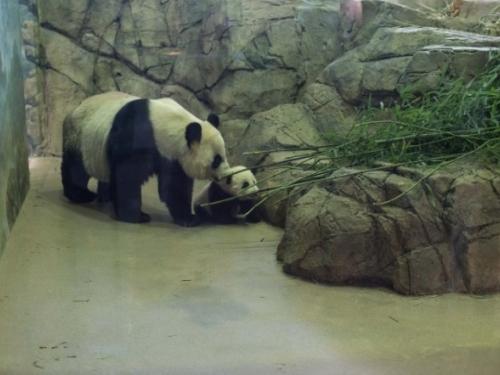 Bao Bao and Mei Xiang