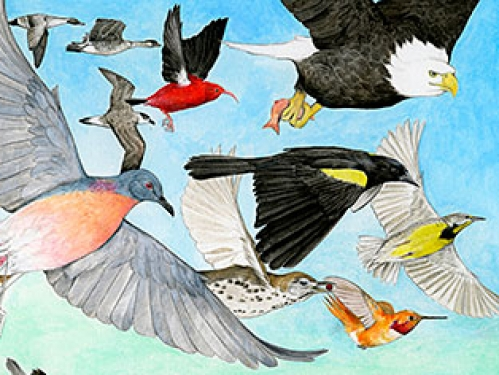 State of the Birds 2014 cover art detail