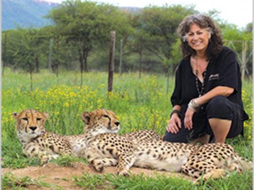 Woman kneeling beside two cheetahs