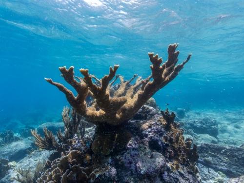 Coral underwater