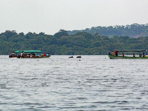 Bocas Del Toro Dolphins