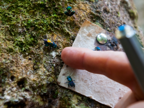 Finger pointing at a bug on foliage