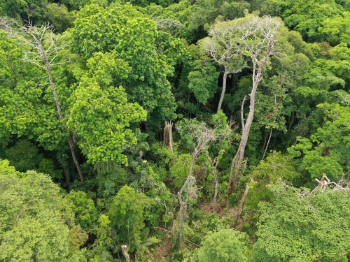 Aerial view of lush tree tops
