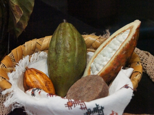 Cacao pods in basket