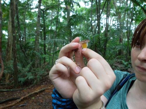researcher holding lizard
